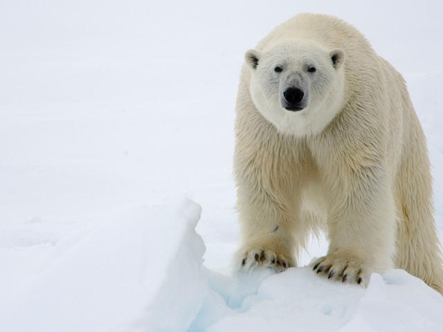Forget the frogs - polar bears make the best princes!