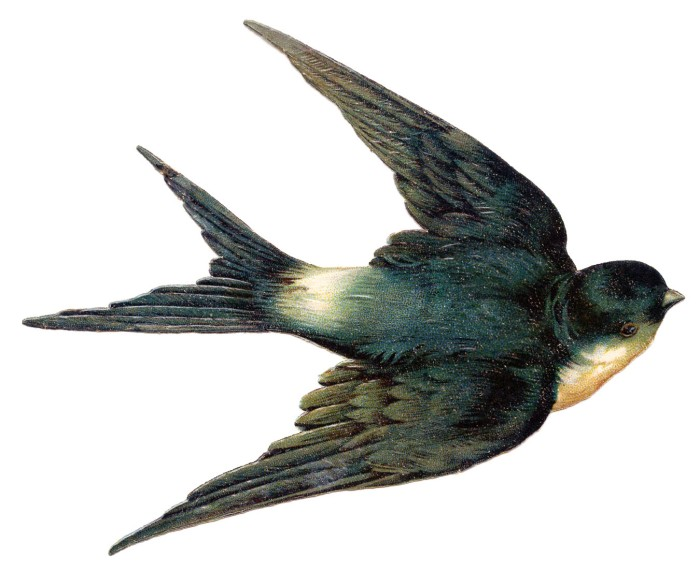 swallow+bird+vintage+image+graphicsfairy007d