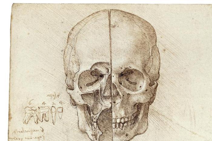 Skull sectioned, by Leonardo da Vinci