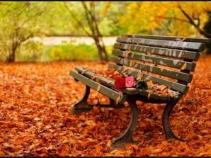 33154-Autumn-Roses